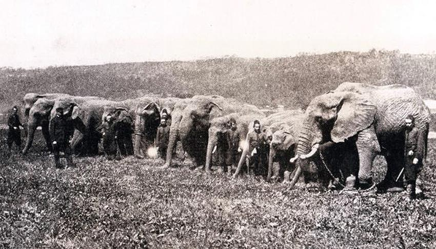 forepaugh circus elephants